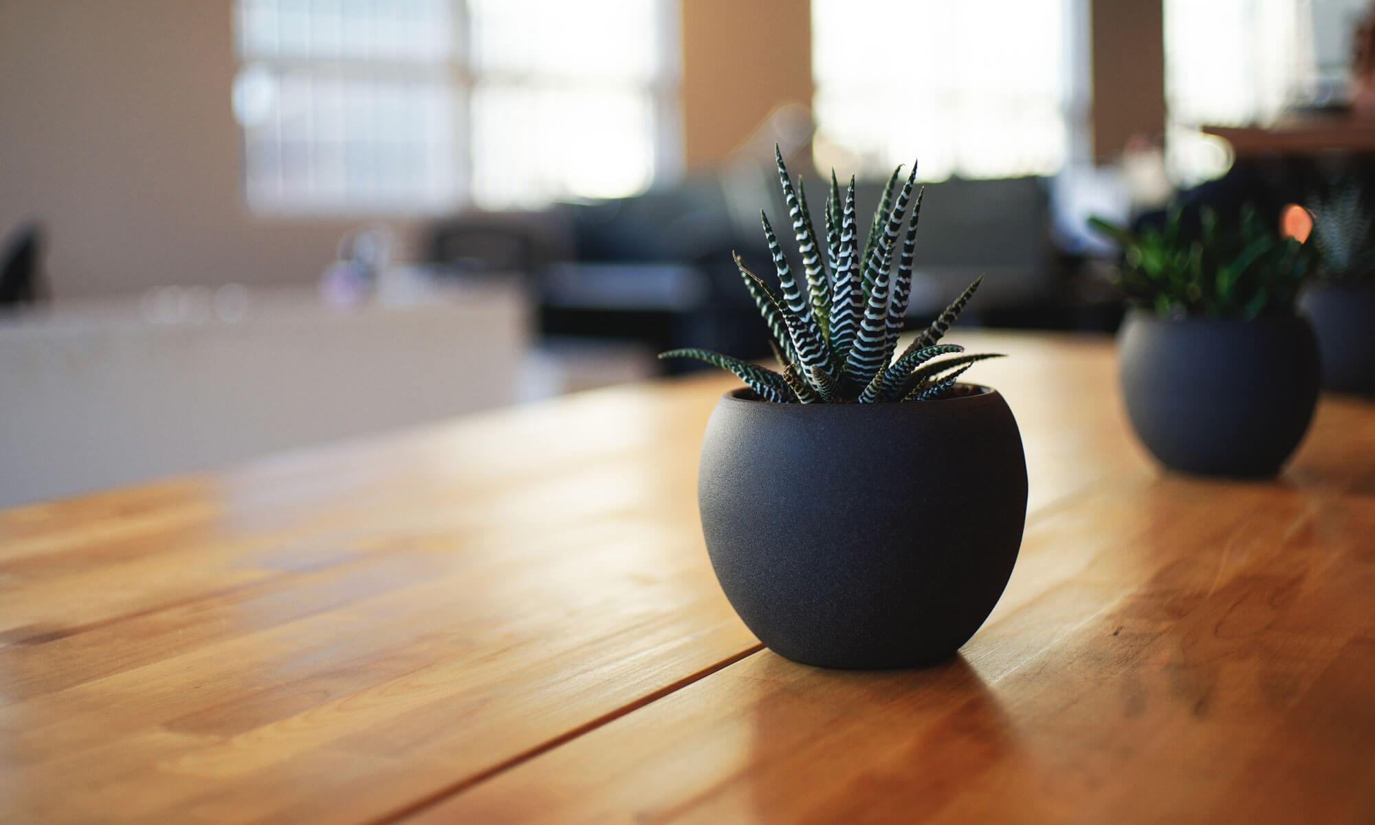 maderacap.org